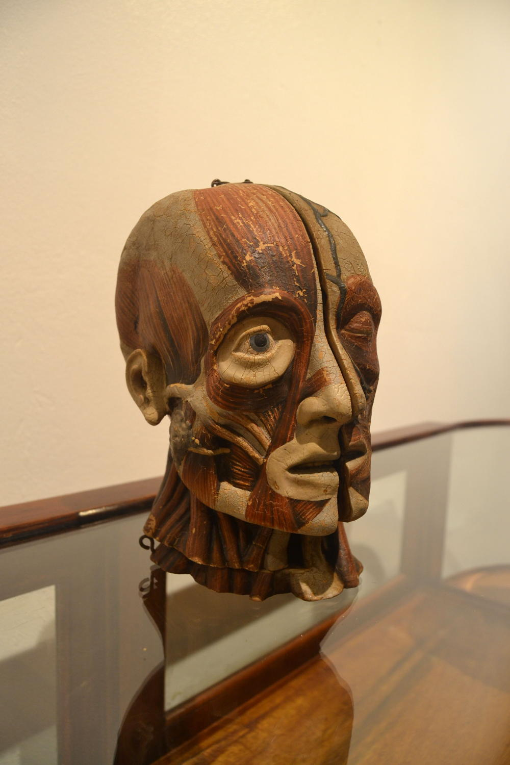 Antique Anatomical Head Model